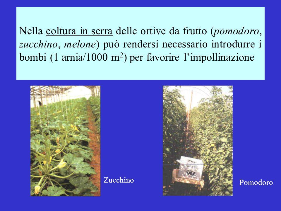 Nella coltura in serra delle ortive da frutto (pomodoro, zucchino, melone) può rendersi necessario introdurre i bombi (1 arnia/1000 m 2 ) per favorire