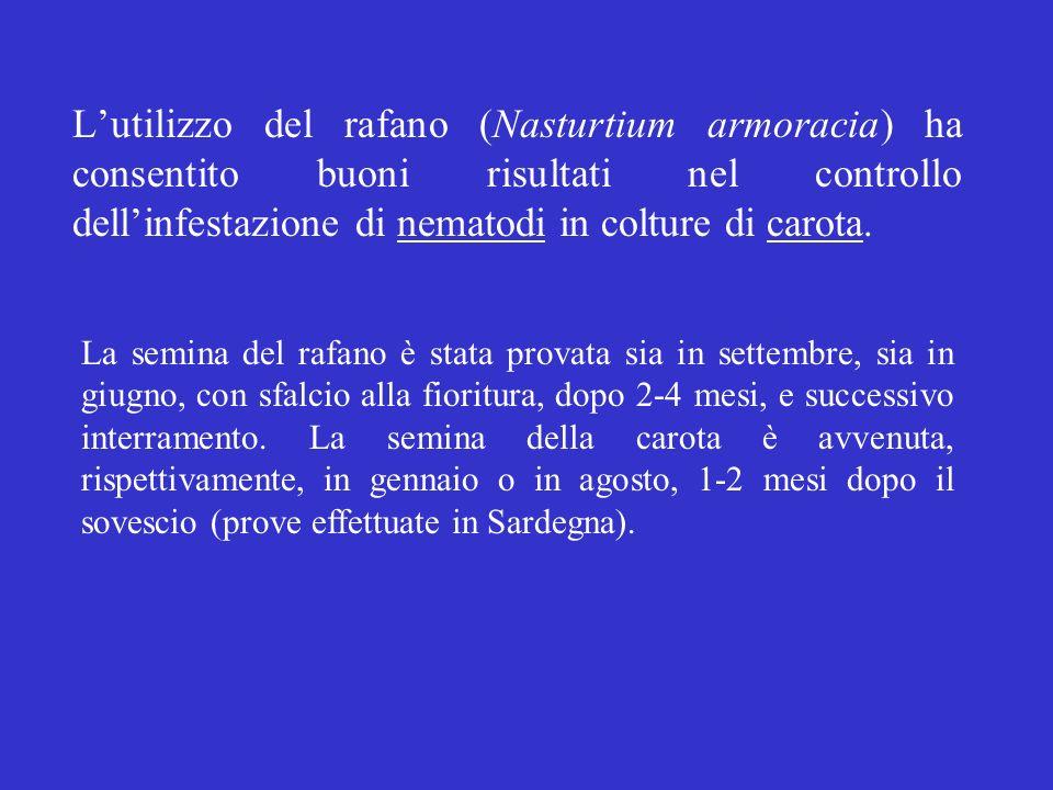 Lutilizzo del rafano (Nasturtium armoracia) ha consentito buoni risultati nel controllo dellinfestazione di nematodi in colture di carota. La semina d