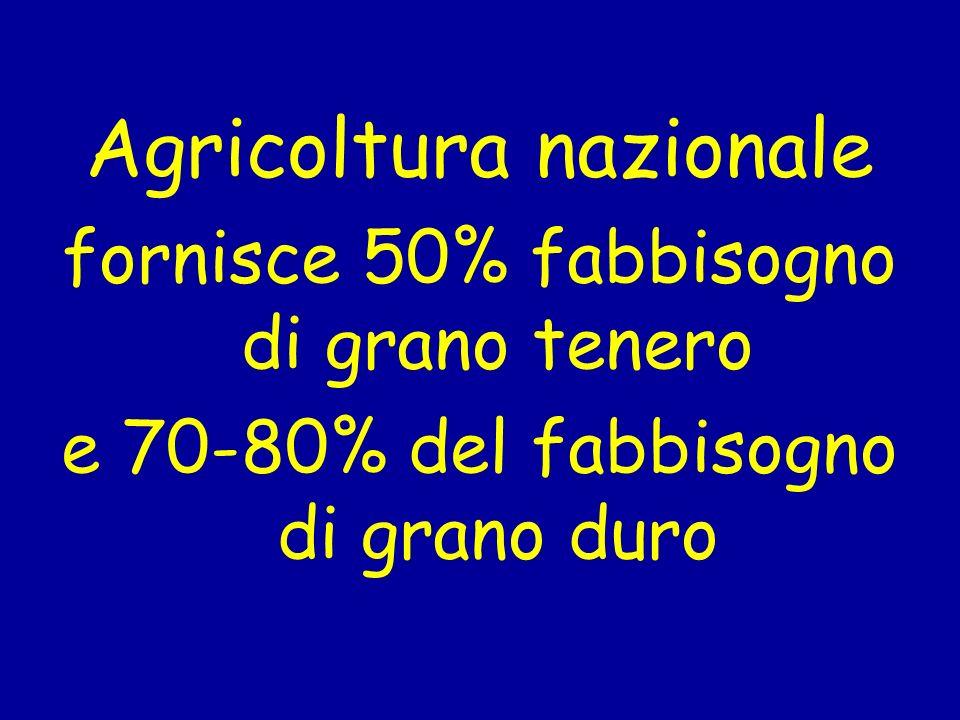 Agricoltura nazionale fornisce 50% fabbisogno di grano tenero e 70-80% del fabbisogno di grano duro