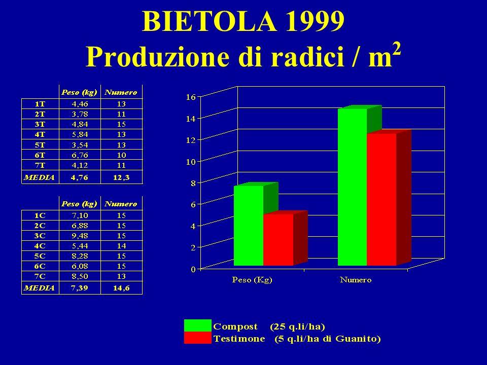 BIETOLA 1999 Produzione di radici / m 2