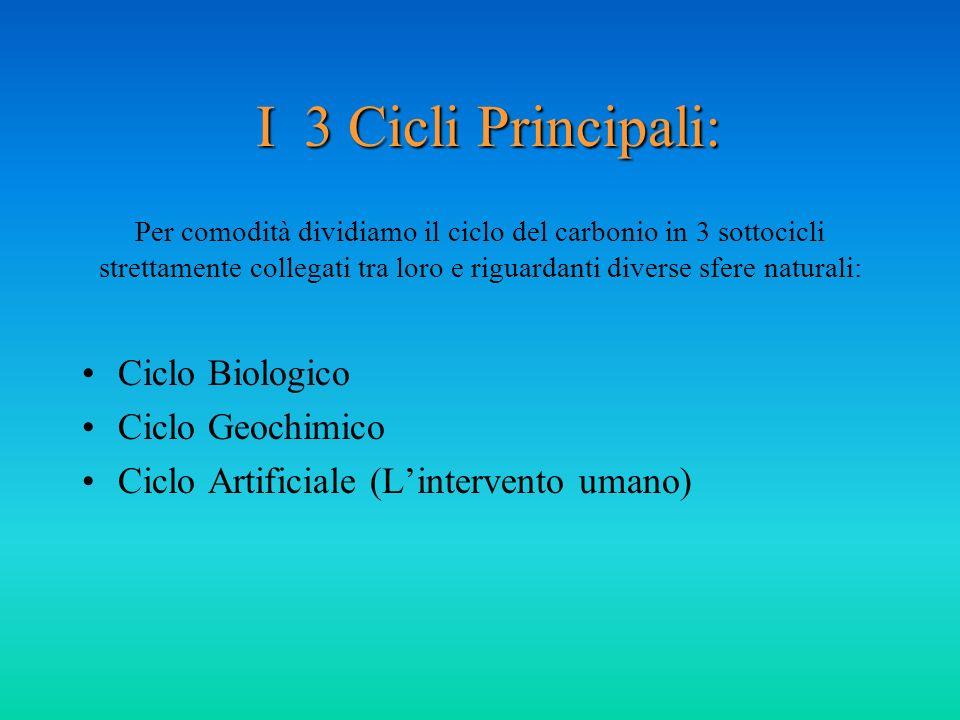 I 3 Cicli Principali: I 3 Cicli Principali: Ciclo Biologico Ciclo Geochimico Ciclo Artificiale (Lintervento umano) Per comodità dividiamo il ciclo del