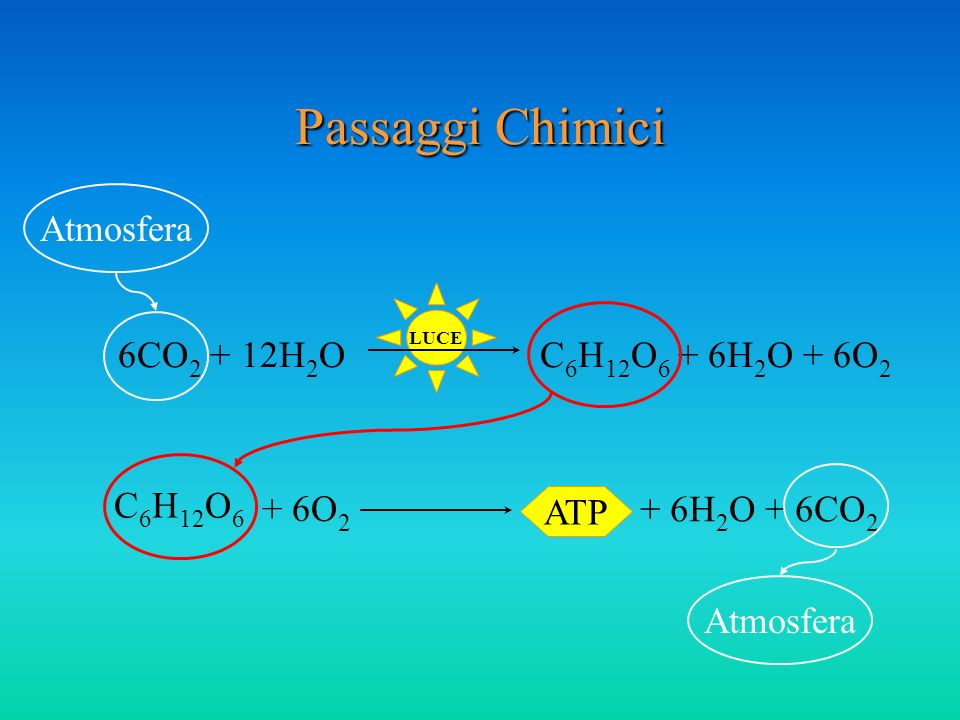 LUCE Passaggi Chimici 6CO 2 + 12H 2 OC 6 H 12 O 6 + 6H 2 O + 6O 2 C 6 H 12 O 6 ATP + 6H 2 O + 6CO 2 Atmosfera + 6O 2