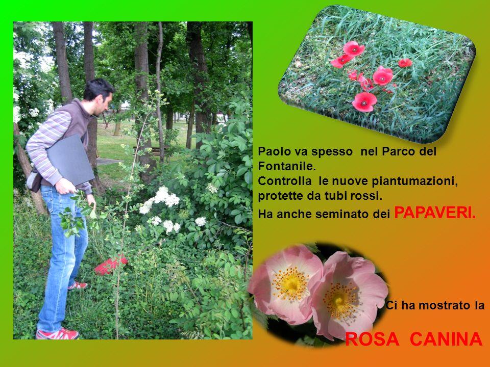 Paolo va spesso nel Parco del Fontanile. Controlla le nuove piantumazioni, protette da tubi rossi. Ha anche seminato dei PAPAVERI. Ci ha mostrato la R