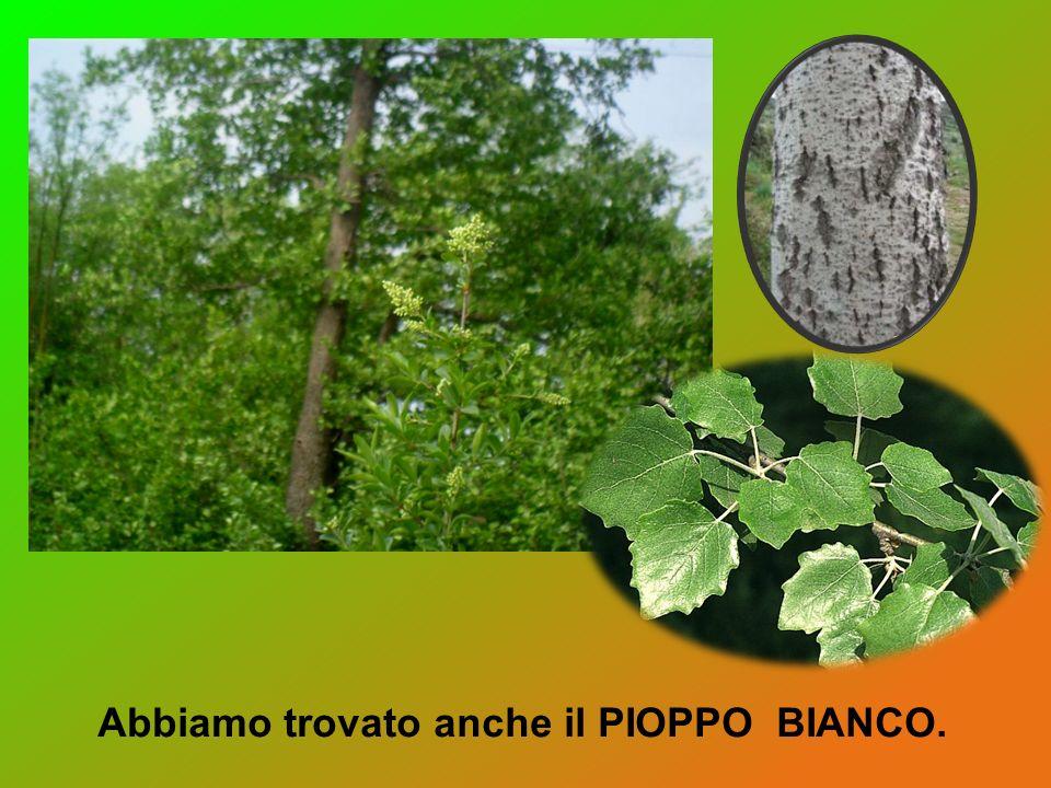 Nel variegato sottobosco, cresce la felce, una pianta semplice che si riproduce attraverso le spore.