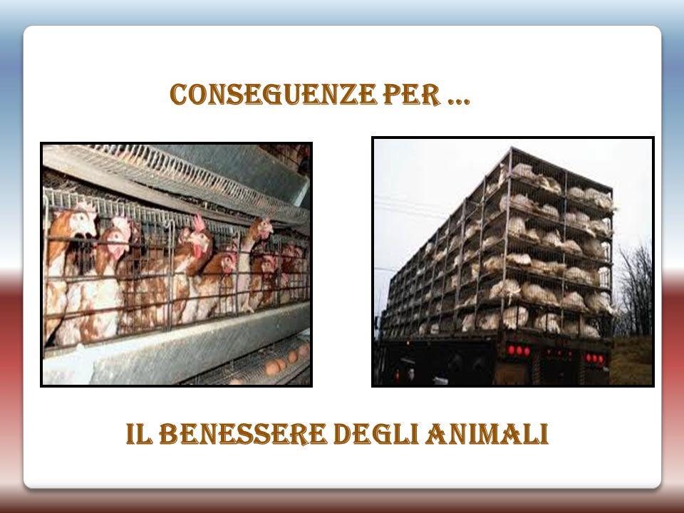 CONSEGUENZE PER … IL BENESSERE DEGLI ANIMALI