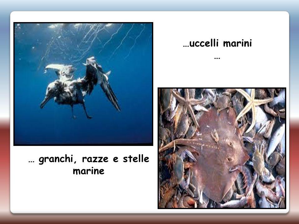 …uccelli marini … … granchi, razze e stelle marine