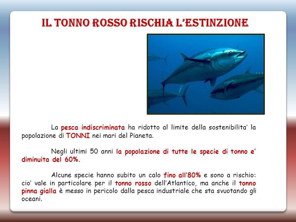 La pesca indiscriminata ha ridotto al limite della sostenibilita la popolazione di TONNI nei mari del Pianeta. Negli ultimi 50 anni la popolazione di