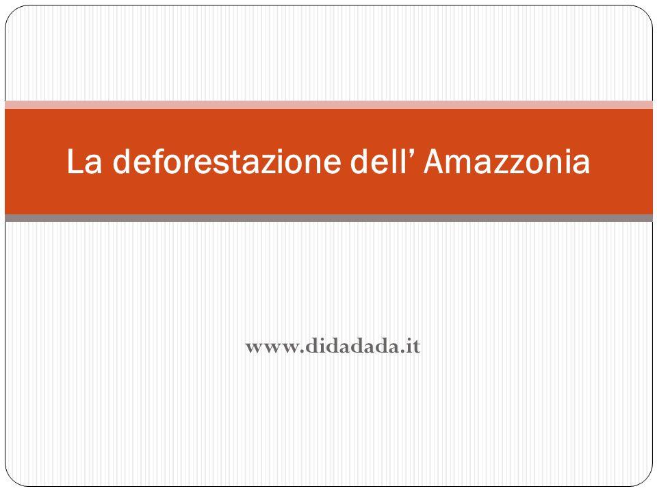 www.didadada.it La deforestazione dell Amazzonia
