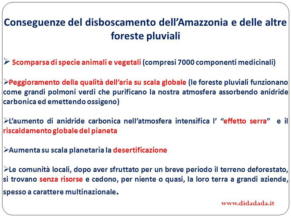 Conseguenze del disboscamento dellAmazzonia e delle altre foreste pluviali Scomparsa di specie animali e vegetali (compresi 7000 componenti medicinali