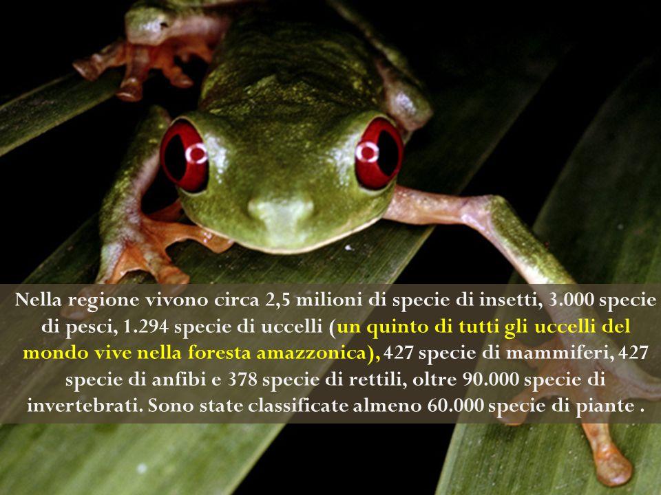 La foresta amazzonica ha un valore biologico inestimabile, perché ospita una grande varietà di specie vegetali e animali (biodiversità) Nella regione