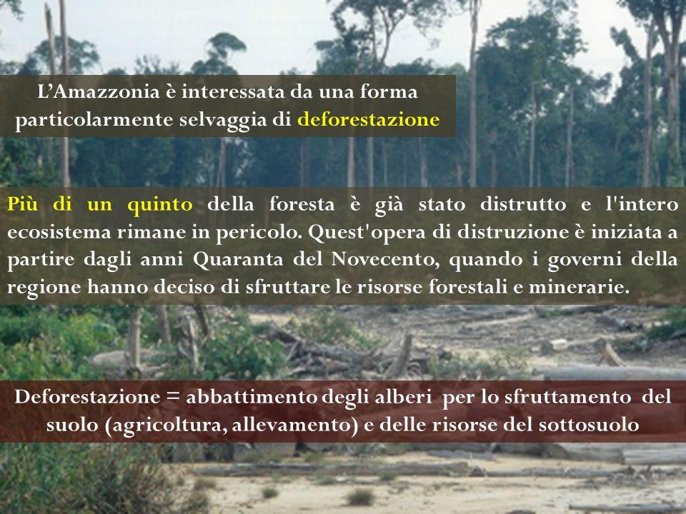 Più di un quinto della foresta è già stato distrutto e l'intero ecosistema rimane in pericolo. Quest'opera di distruzione è iniziata a partire dagli a