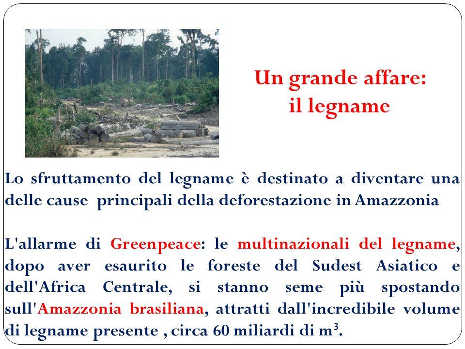 Lo sfruttamento del legname è destinato a diventare una delle cause principali della deforestazione in Amazzonia L'allarme di Greenpeace: le multinazi