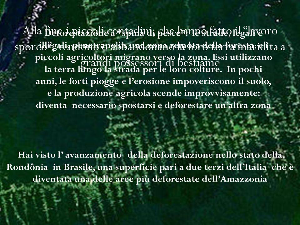 http://www.didadada.it/deforestazion e-Amazzonia-immagini-satellitari.htm Questo filmato mostra, attraverso una sequenza di immagini satellitari, come