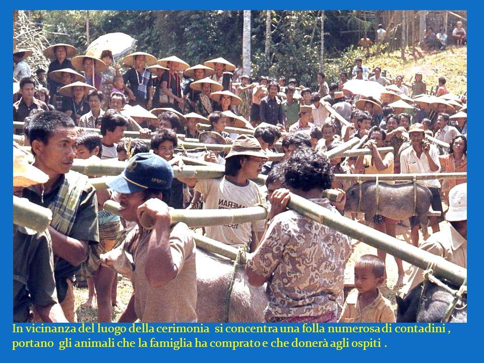 In vicinanza del luogo della cerimonia si concentra una folla numerosa di contadini, portano gli animali che la famiglia ha comprato e che donerà agli