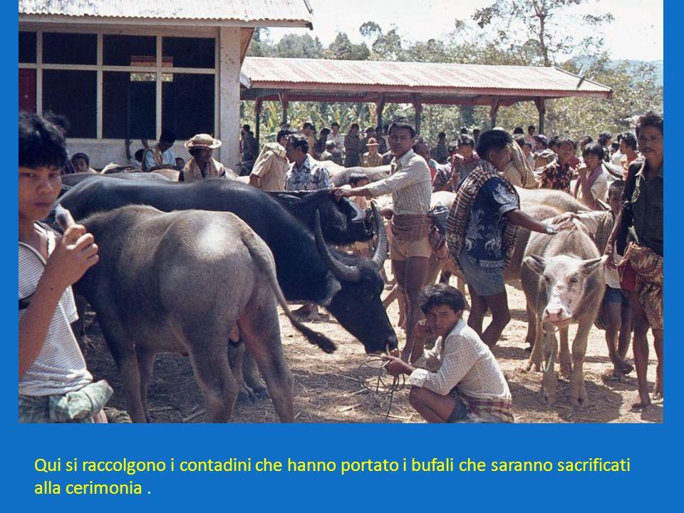 Qui si raccolgono i contadini che hanno portato i bufali che saranno sacrificati alla cerimonia.
