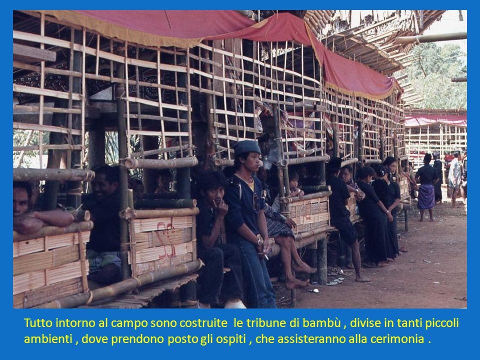 Tutto intorno al campo sono costruite le tribune di bambù, divise in tanti piccoli ambienti, dove prendono posto gli ospiti, che assisteranno alla cer