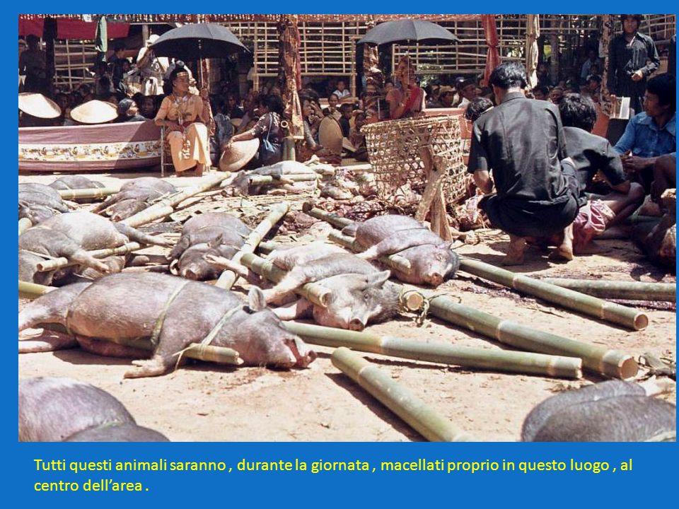Tutti questi animali saranno, durante la giornata, macellati proprio in questo luogo, al centro dellarea.