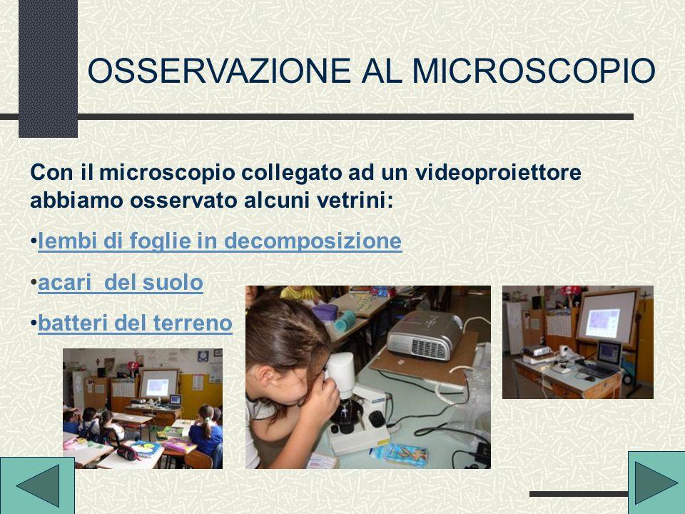 OSSERVAZIONE AL MICROSCOPIO Con il microscopio collegato ad un videoproiettore abbiamo osservato alcuni vetrini: lembi di foglie in decomposizione aca