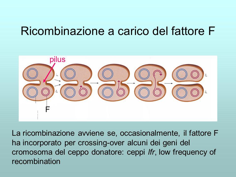 Incorporazione nel fattore F di alcuni geni del cromosoma del ceppo donatore