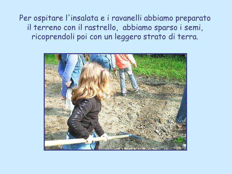 Per ospitare l'insalata e i ravanelli abbiamo preparato il terreno con il rastrello, abbiamo sparso i semi, ricoprendoli poi con un leggero strato di