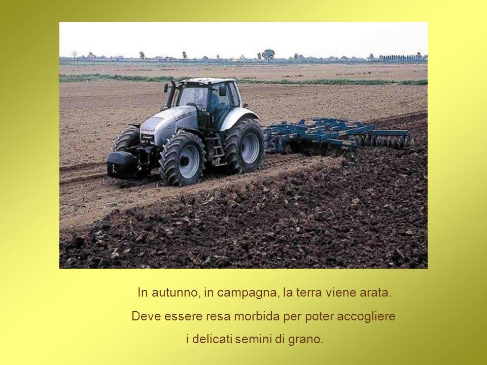 In autunno, in campagna, la terra viene arata. Deve essere resa morbida per poter accogliere i delicati semini di grano.