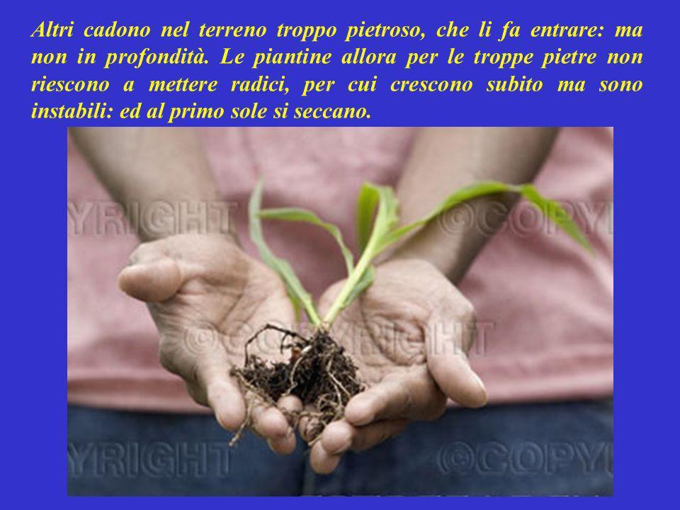 Proprio per far capire questo allora, raccontò questa parabola: Quando il contadino semina, non tutti i semi finiscono sul terreno fertile e producono FRUTTI.