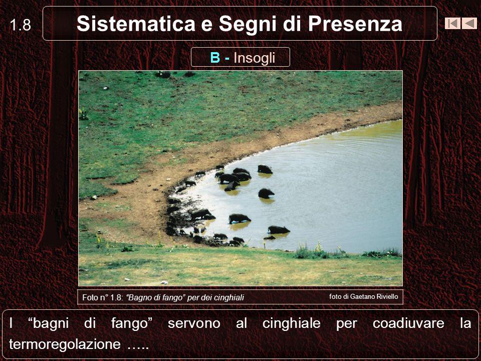 Sistematica e Segni di Presenza 1.18 Foto n° 1.17: Trottoio foto di Marco Novelli D - Trottoi Ciò produce i cosiddetti trottoi che sono segni evidenti del passaggio degli animali.