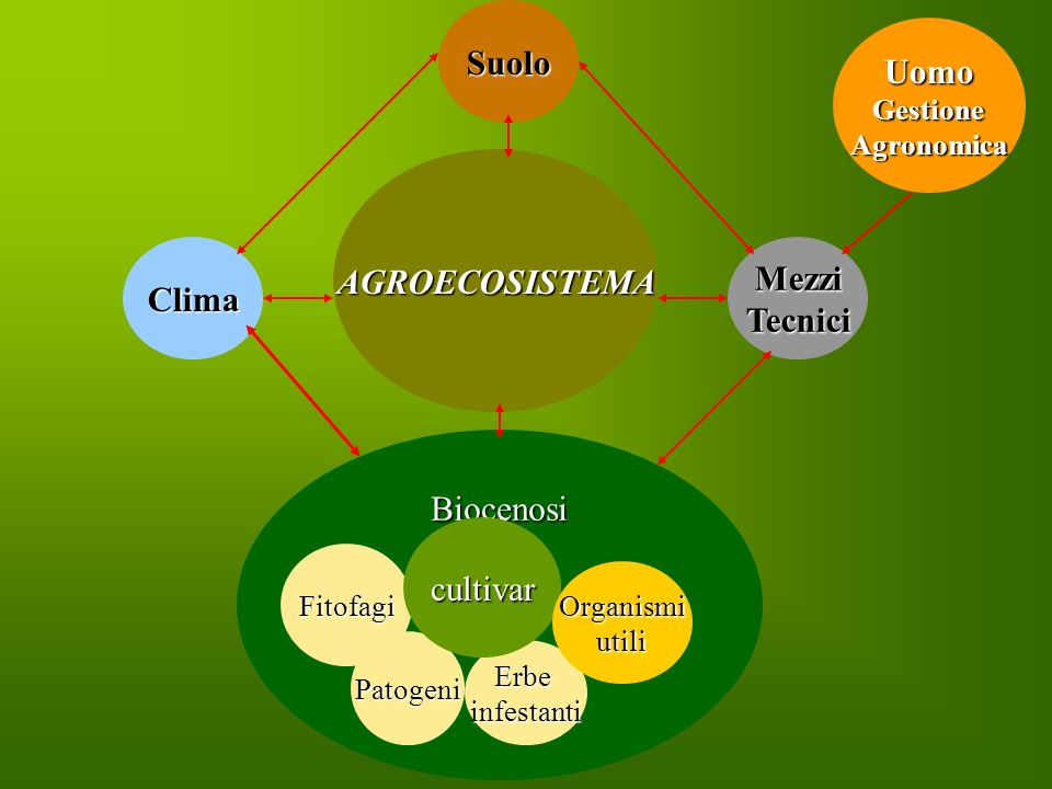 UomoGestioneAgronomica AGROECOSISTEMA BiocenosiSuoloClimaMezziTecnici Erbeinfestanti Patogeni Fitofagi cultivar Organismiutili