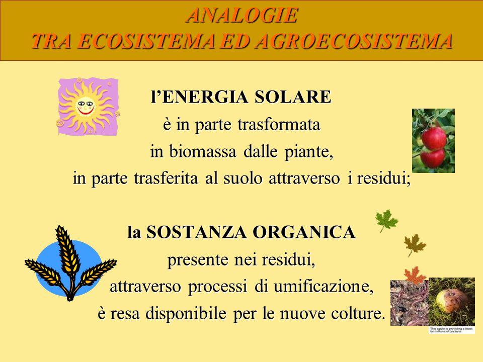 ANALOGIE TRA ECOSISTEMA ED AGROECOSISTEMA lENERGIA SOLARE è in parte trasformata in biomassa dalle piante, in parte trasferita al suolo attraverso i r