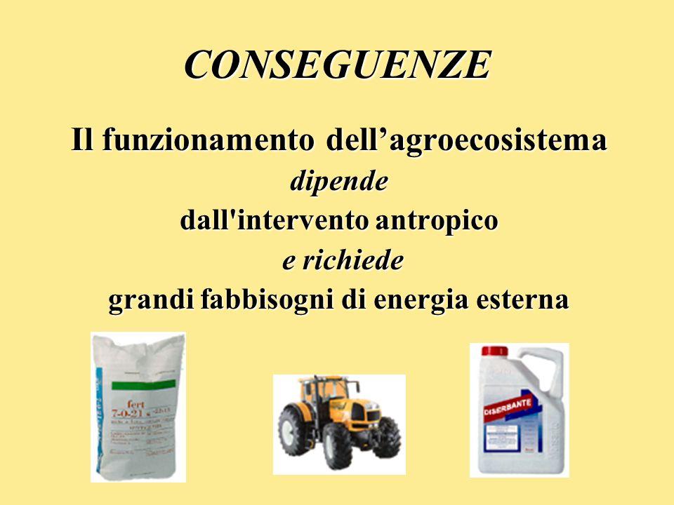 CONSEGUENZE Il funzionamento dellagroecosistema dipende dall'intervento antropico e richiede e richiede grandi fabbisogni di energia esterna