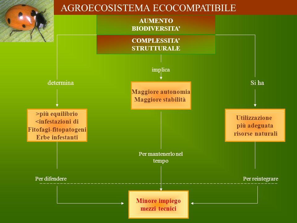 AUMENTO BIODIVERSITA COMPLESSITA STRUTTURALE >più equilibrio <infestazioni di Fitofagi-fitopatogeni Erbe infestanti Utilizzazione più adeguata risorse