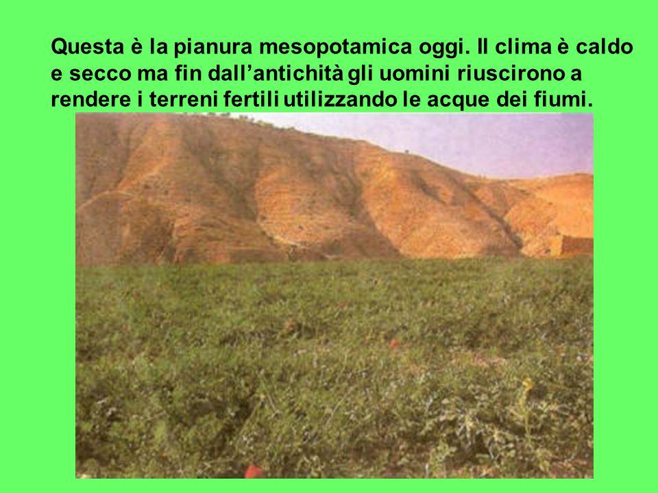 Questa è la pianura mesopotamica oggi. Il clima è caldo e secco ma fin dallantichità gli uomini riuscirono a rendere i terreni fertili utilizzando le