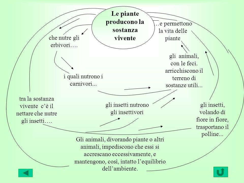 Le piante producono la sostanza vivente …e permettono la vita delle piante gli animali, con le feci. arricchiscono il terreno di sostanze utili... gli