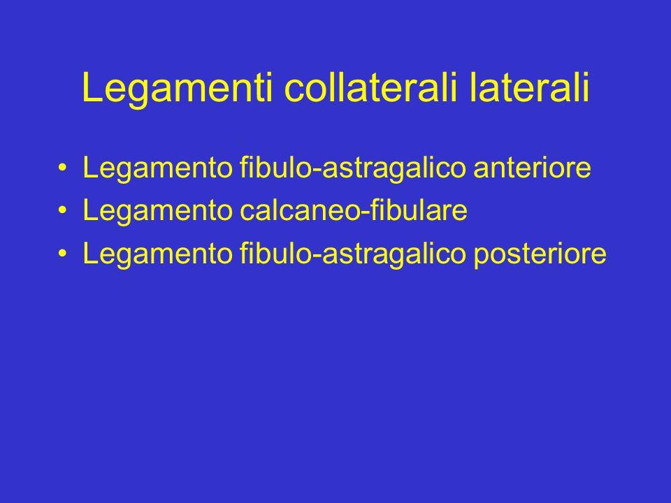 Legamenti collaterali laterali Legamento fibulo-astragalico anteriore Legamento calcaneo-fibulare Legamento fibulo-astragalico posteriore