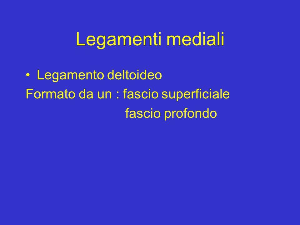 Legamenti mediali Legamento deltoideo Formato da un : fascio superficiale fascio profondo