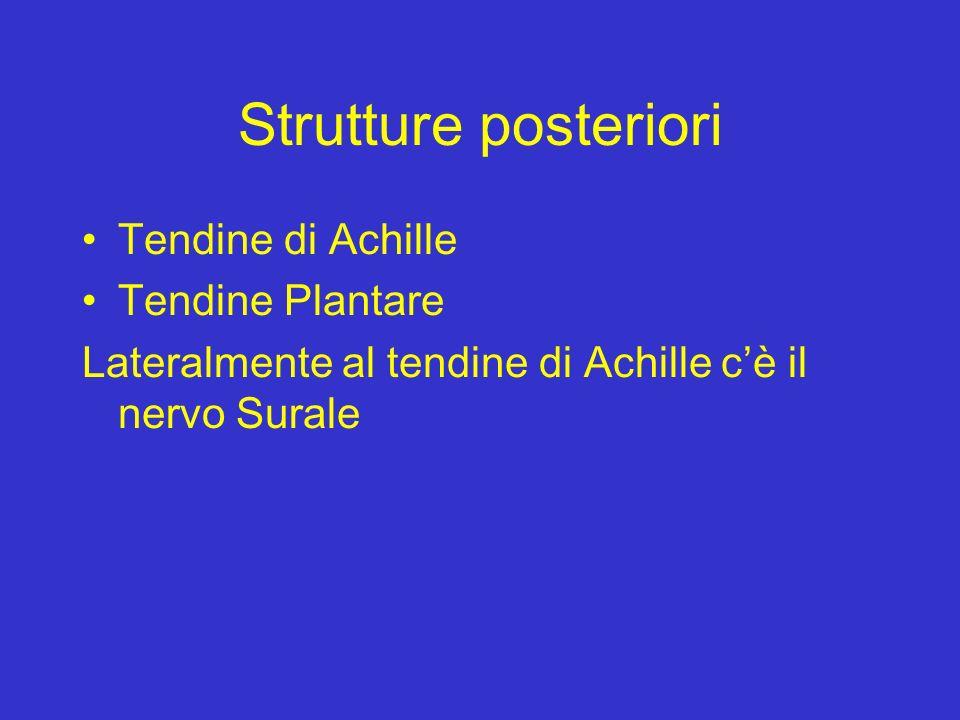 Strutture posteriori Tendine di Achille Tendine Plantare Lateralmente al tendine di Achille cè il nervo Surale