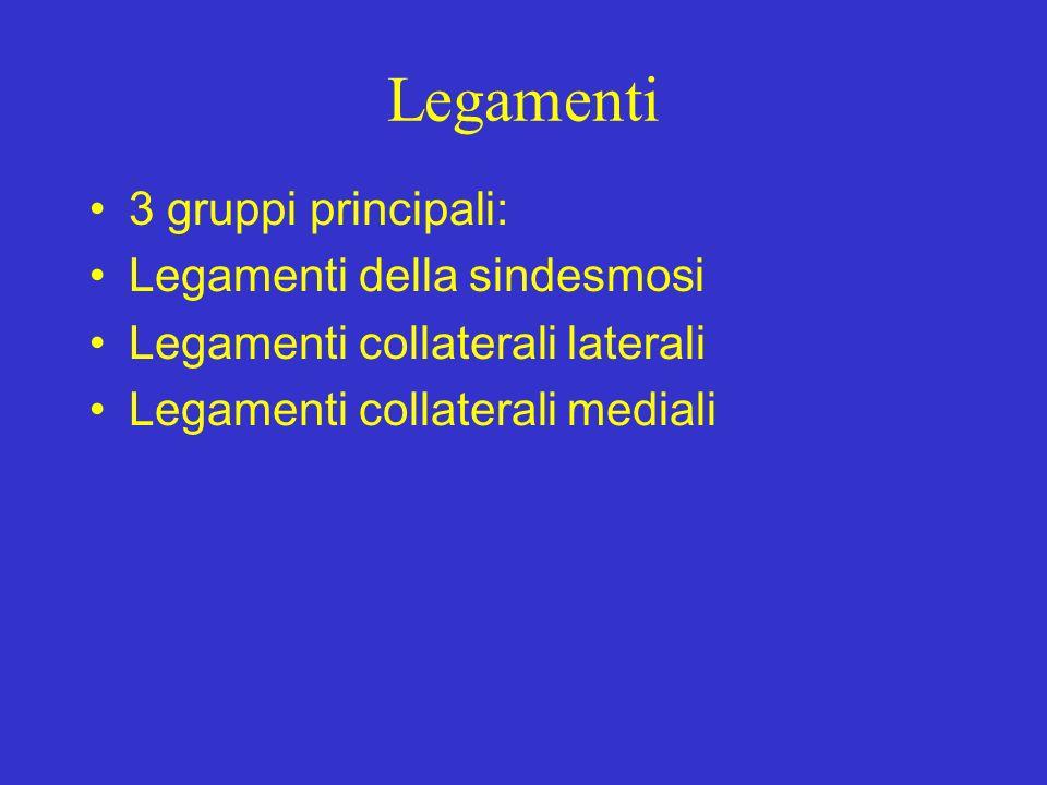 Legamenti 3 gruppi principali: Legamenti della sindesmosi Legamenti collaterali laterali Legamenti collaterali mediali