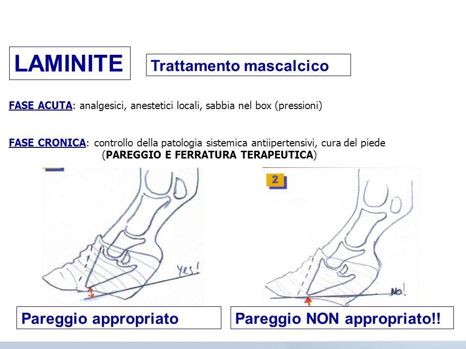 Trattamento mascalcico FASE ACUTA: analgesici, anestetici locali, sabbia nel box (pressioni) FASE CRONICA: controllo della patologia sistemica antiipe
