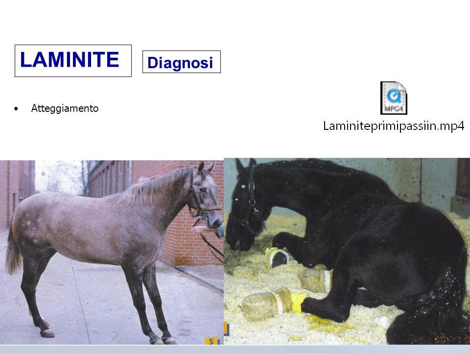 Diagnosi Atteggiamento LAMINITE