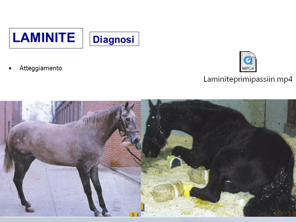 Andatura; Radiografie Diagnosi LAMINITE
