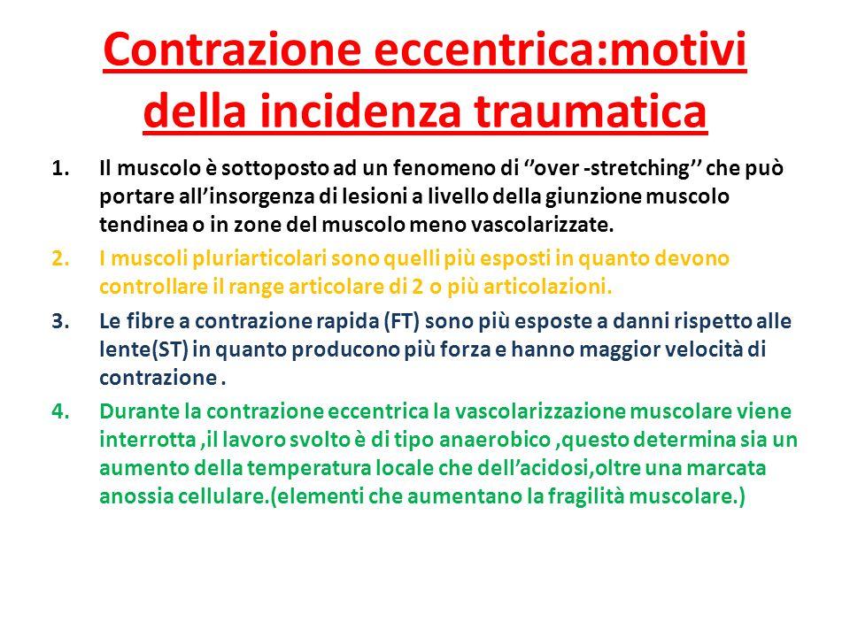 Contrazione eccentrica:motivi della incidenza traumatica 1.Il muscolo è sottoposto ad un fenomeno di over -stretching che può portare allinsorgenza di