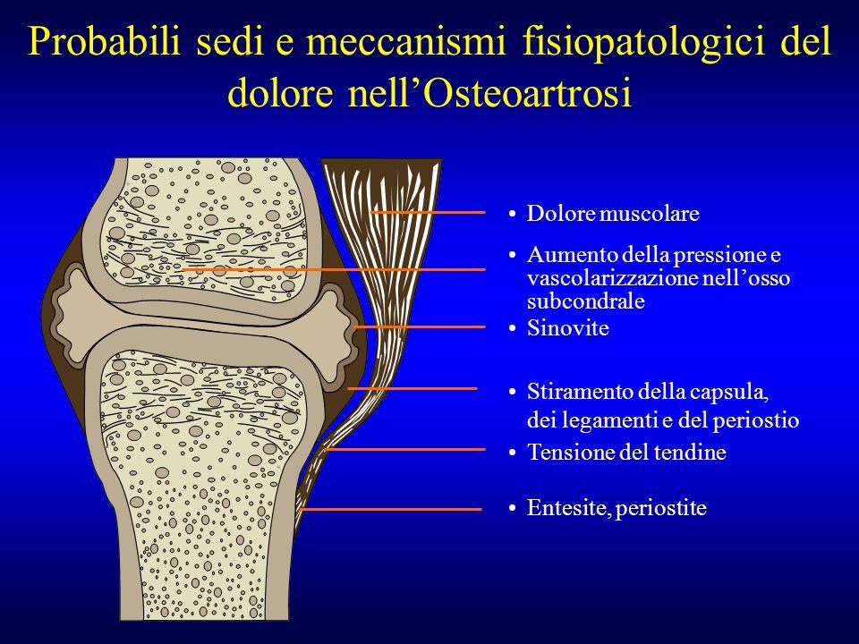 Probabili sedi e meccanismi fisiopatologici del dolore nellOsteoartrosi Dolore muscolare Aumento della pressione e vascolarizzazione nellosso subcondr