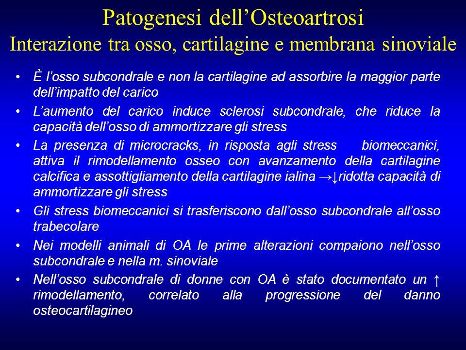 È losso subcondrale e non la cartilagine ad assorbire la maggior parte dellimpatto del carico Laumento del carico induce sclerosi subcondrale, che rid