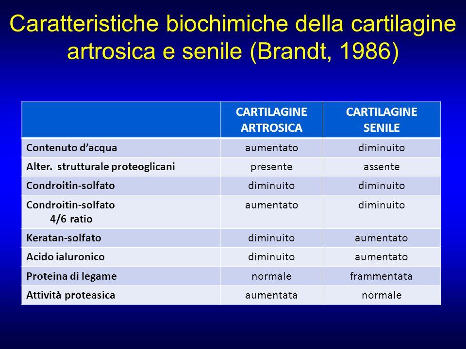 Caratteristiche biochimiche della cartilagine artrosica e senile (Brandt, 1986) CARTILAGINE ARTROSICA CARTILAGINE SENILE Contenuto dacquaaumentatodimi