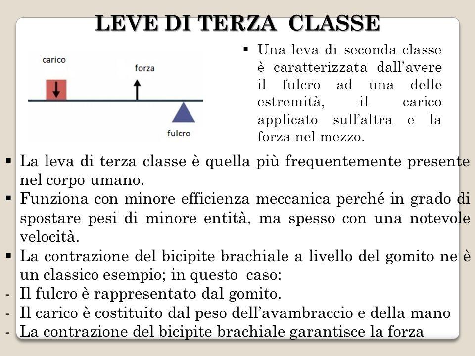 LEVE DI TERZA CLASSE Una leva di seconda classe è caratterizzata dallavere il fulcro ad una delle estremità, il carico applicato sullaltra e la forza