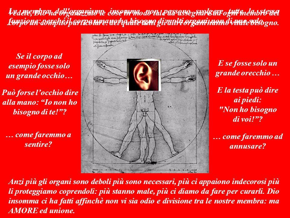 Le membra dell organismo insomma non possono svolgere tutte la stessa funzione: perché il corpo umano ha bisogno di molti organi, non di uno solo.