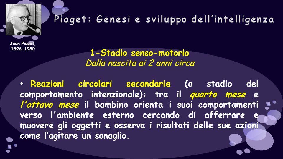 1-Stadio senso-motorio Dalla nascita ai 2 anni circa Reazioni circolari secondarie (o stadio del comportamento intenzionale): tra il quarto mese e l'o