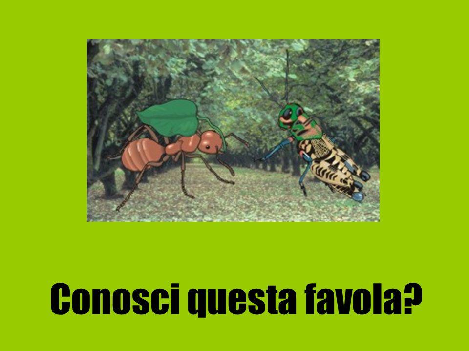 Cera una volta una Formica e una Cicala.