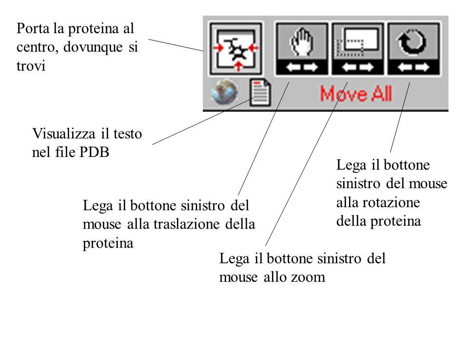 Porta la proteina al centro, dovunque si trovi Lega il bottone sinistro del mouse alla traslazione della proteina Lega il bottone sinistro del mouse a
