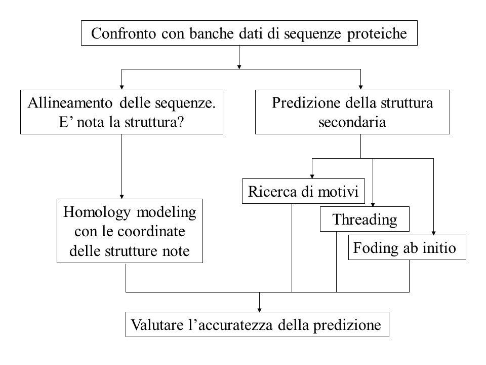 Confronto con banche dati di sequenze proteiche Allineamento delle sequenze. E nota la struttura? Predizione della struttura secondaria Homology model